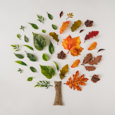 Creative season layout of colorful summer and autumn leaves and branches