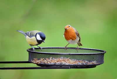 Garden Birds. European Robin, Erithacus rubecula and Great tit, Parus major on seed tray feeder in Winter.